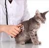 Ветеринарные клиники в Черемисиново